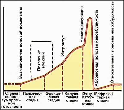 Сексуальные циклы